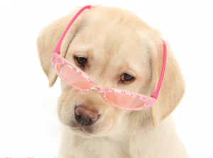 treament of cataract in dogs