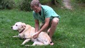 Arthritis in dog Symptoms