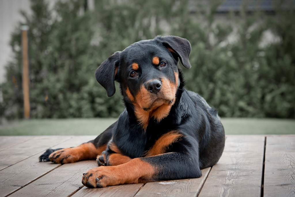 Overview of Skin Cancer in Dogs Symptoms,Types,Treatment