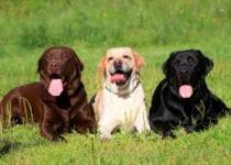 Common Dog Diseases