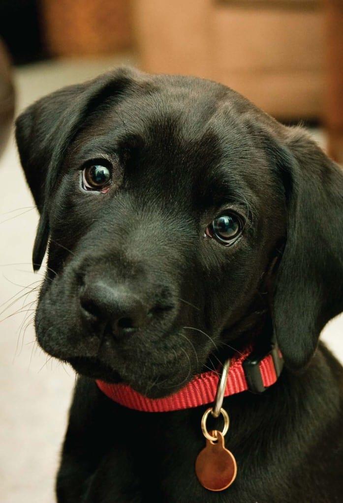 Symptoms Of Mange In Dogs